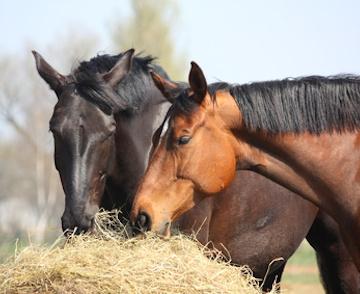 Conseils personnalisés sur l'alimentation des chevaux