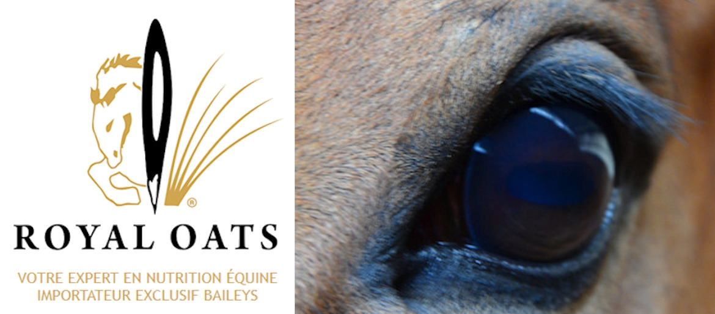 Royal Oats, votre expert en nutrition équine