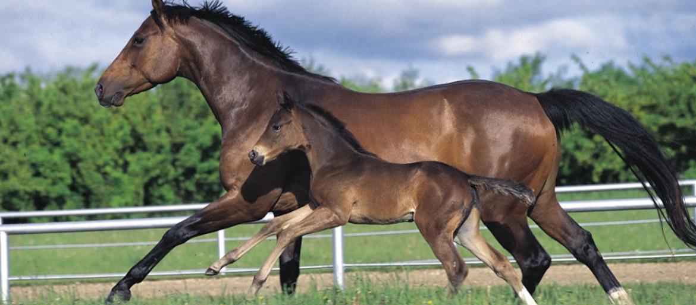 Nutrition élevage de chevaux